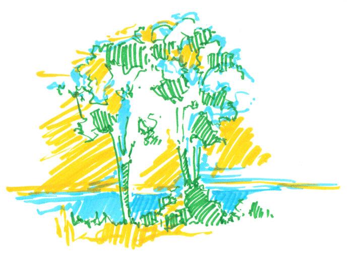 m_kenya_trees1
