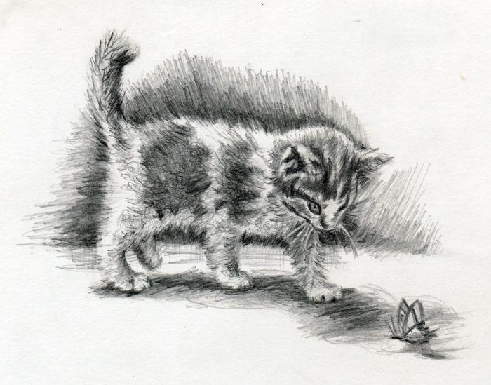 p_cat