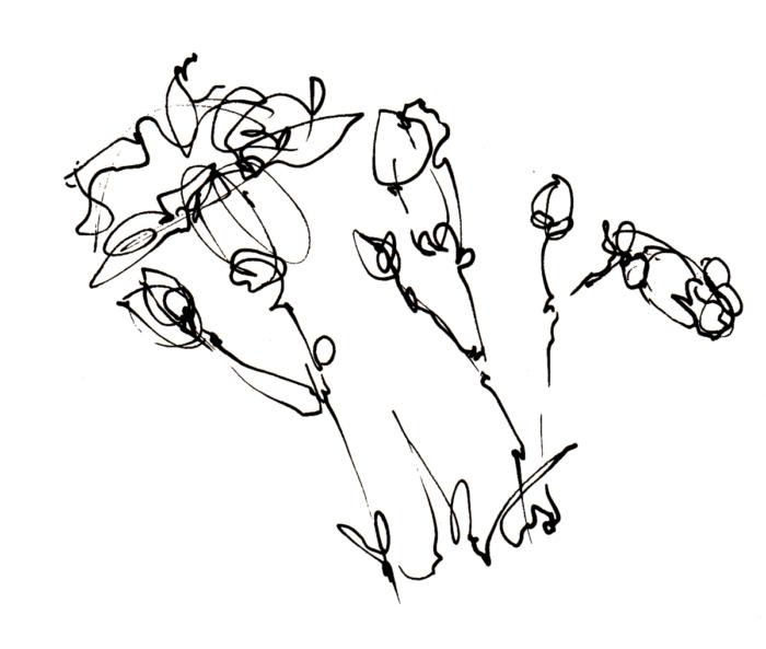 s_flower_carnations1