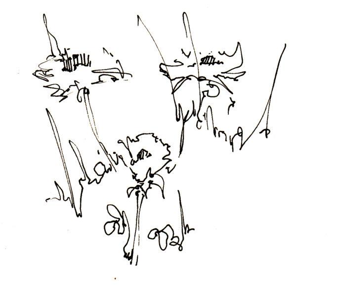 s_flower_dandelions1