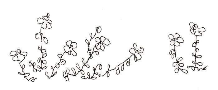 s_flowers_ro16_
