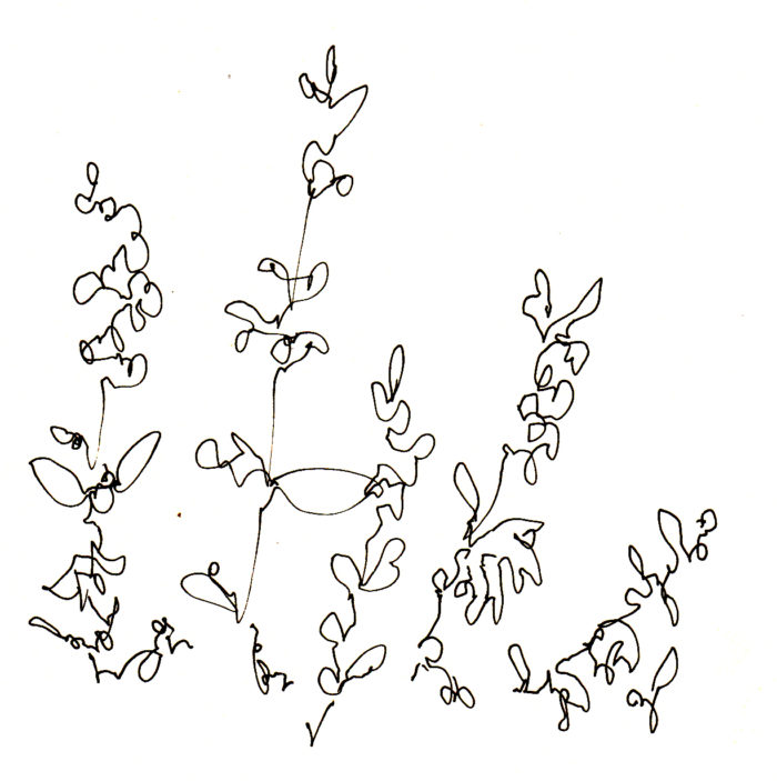 s_wildflower11