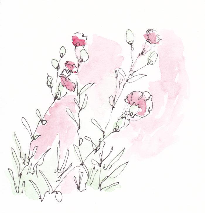 w_carnations