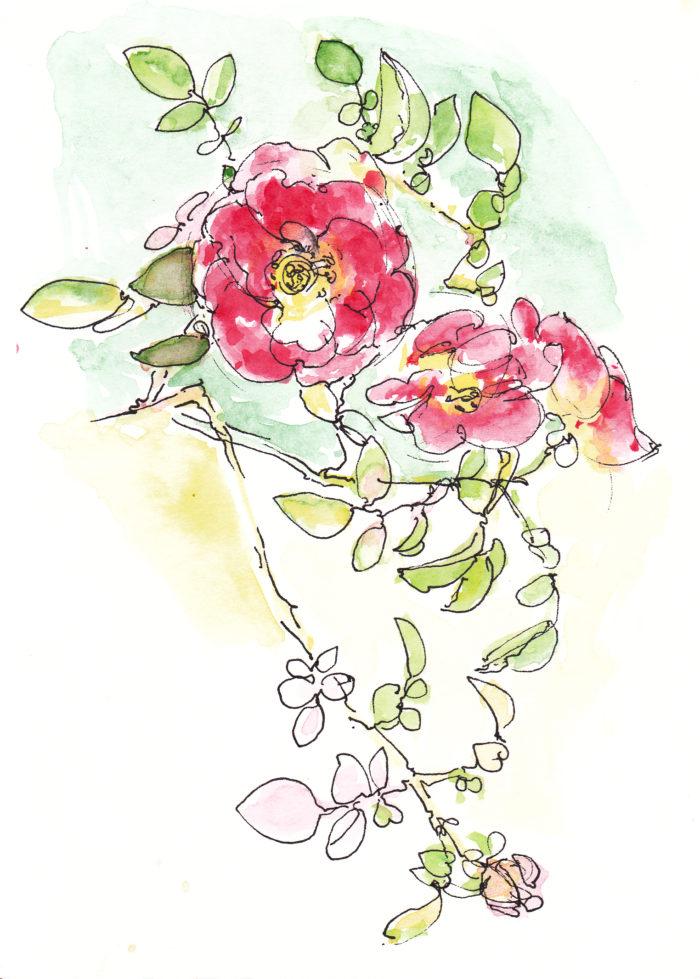w_ro_roses1